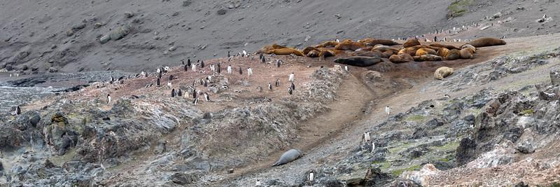 2019_01_Antarktis_01310.jpg