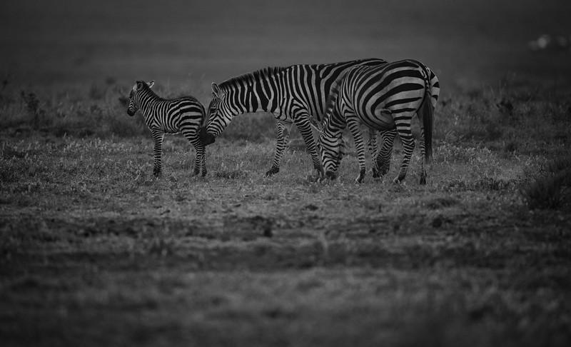 Tanzania_Feb_2018-314.jpg