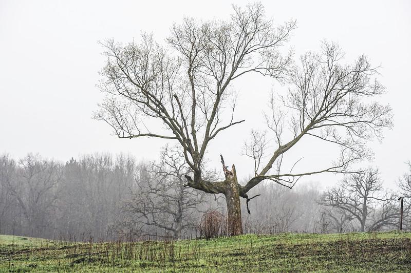 Tree Arboretum landscape.JPG