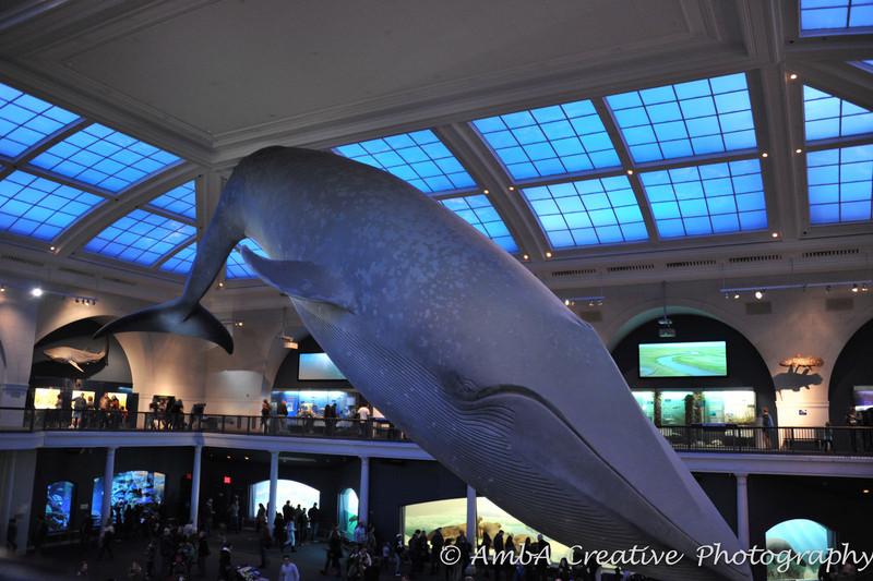2013-12-30_AMNHMuseum@NewYorkNY_73.jpg