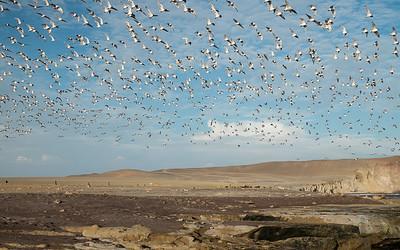 Paracas - Réserve nationale