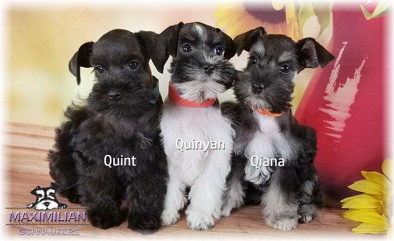 Brianna Pups 014.jpg