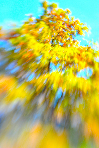 Fall colors with lens baby.