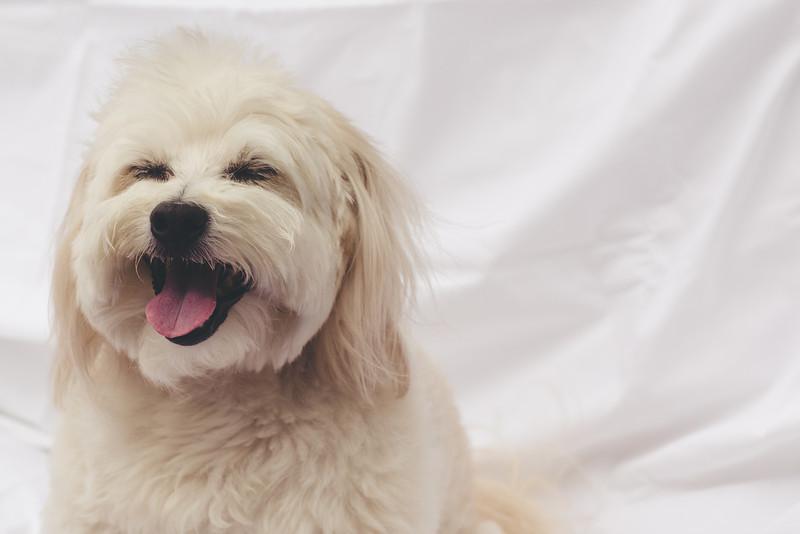 opal mike dogs (1 of 1)-63.jpg