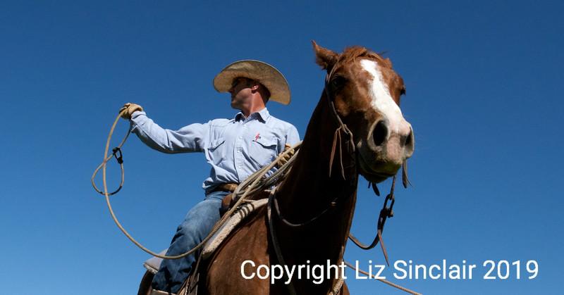 Crutch Ranch Branding 1