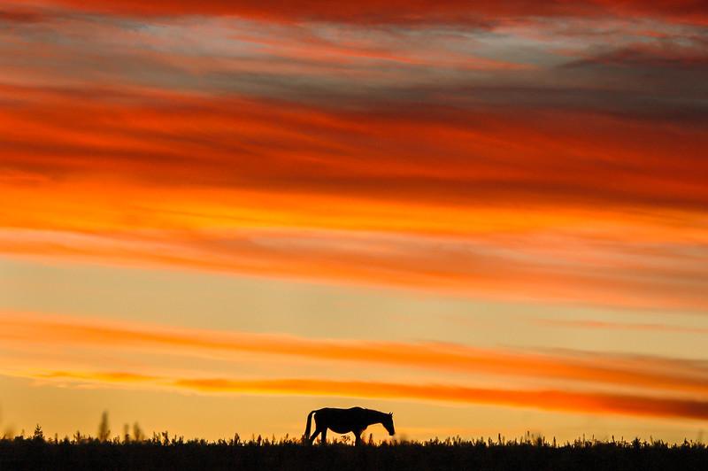Wild Horse Under Sunset Sky #4