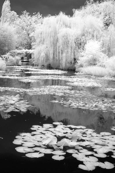 Giverny5 8x12.jpg
