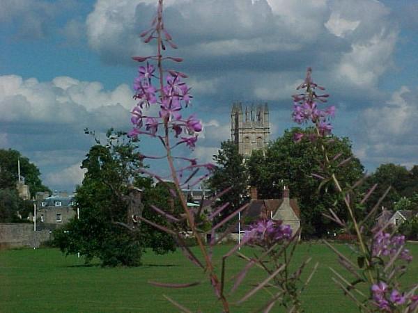 Oxford building - flowers.JPG