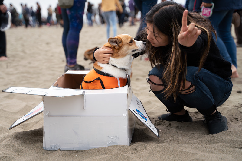 Dogs-185.jpg