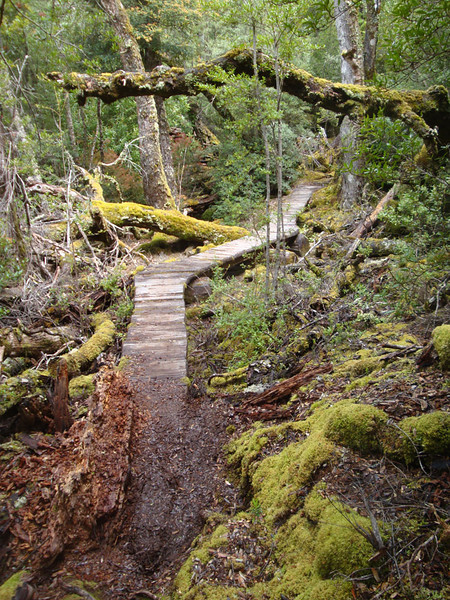 Trail mossy.JPG