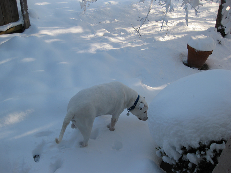 Snow in Jackson_20090301_008.JPG