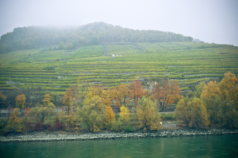 Vineyards exclusively for Viking River Cruises