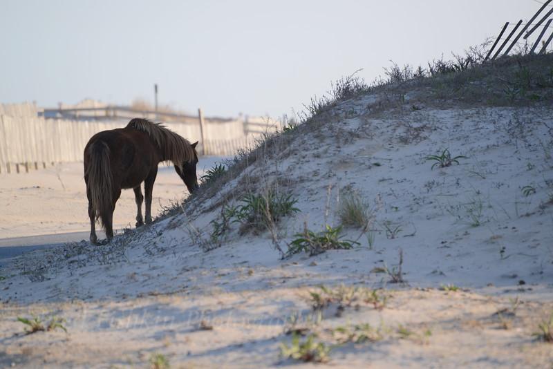 horse at dune 05_01_18.JPG