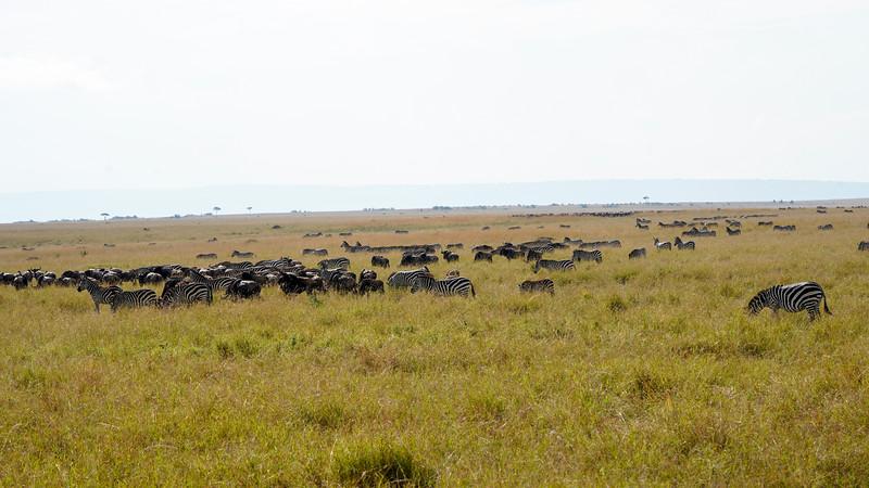 safari-2018-113.jpg
