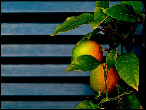 Oranges & Lemons - Agrumi