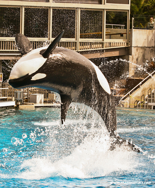 Seaworld-Zoo-19.jpg