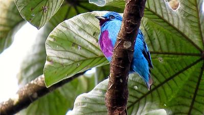 CR1-CR2 Costa Rica Birding the Edges=