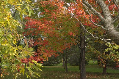 Irving Arboretum, Bouctouche : Monday 16 October 2017