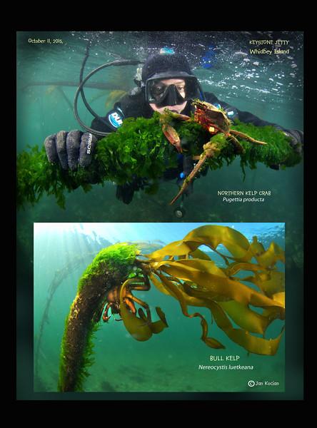 10.11.15 Maya N Kelp crab L.jpg