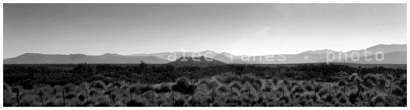 Portfolio Landscapes