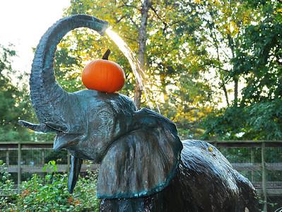 Saint Louis Zoo, 19 October 2014
