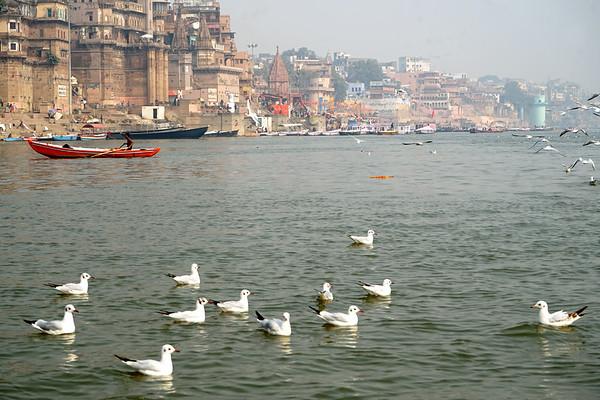 Dic 2018 - Varanasi (3)