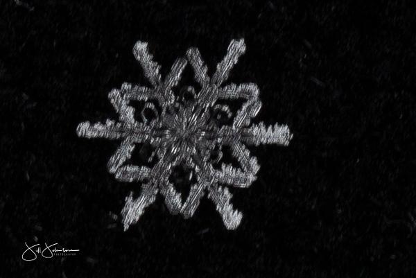 snowflakes-2649.jpg