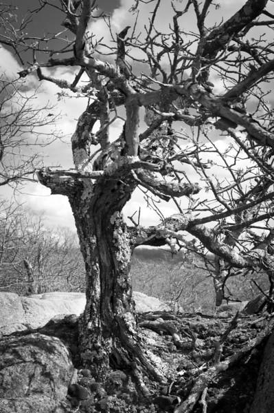 20120319-Elephant Rocks-1773.jpg