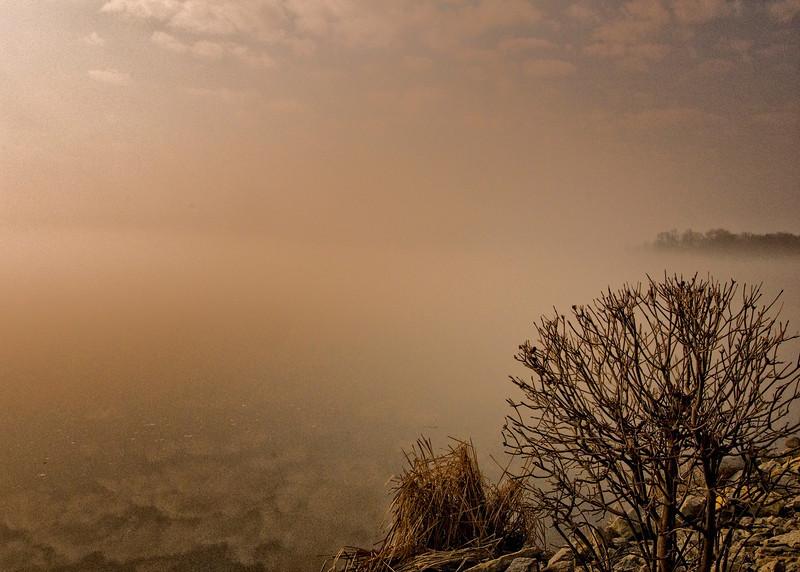 Bush in the fog _1110 - Copy.jpg