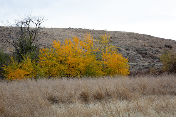 2018-10-29 Snow Mountain Ranch: Riparian East, Cowiche Mountain East & West Trails