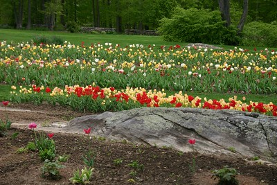 May 8, 2004 - Steinhardt Garden - Mt. Kisco, NY