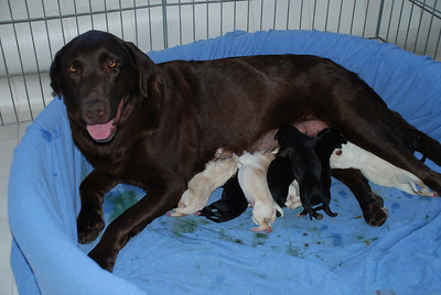 Jessie's Pups