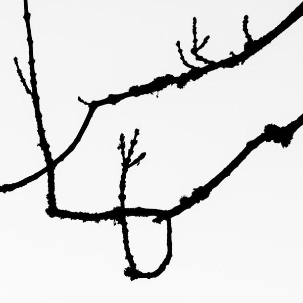 Tree silhouette 5Esche