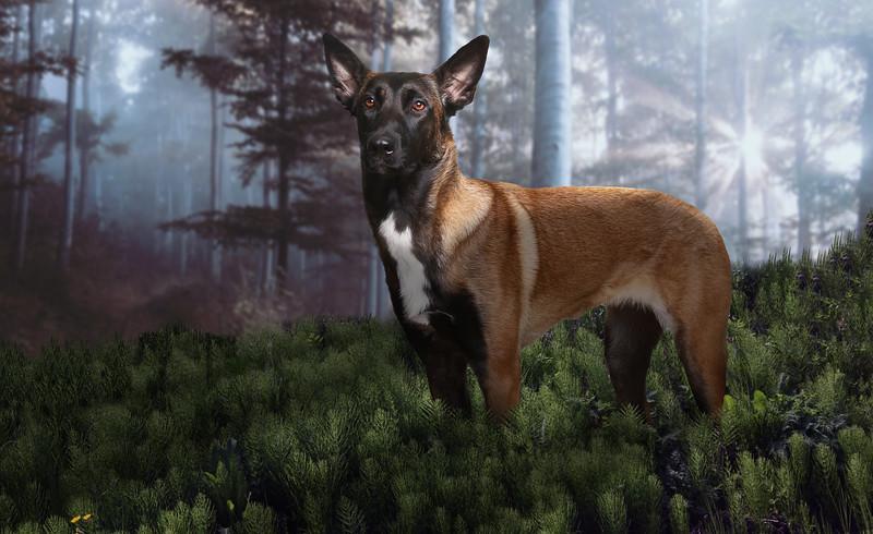 Wolfie-3y.jpg