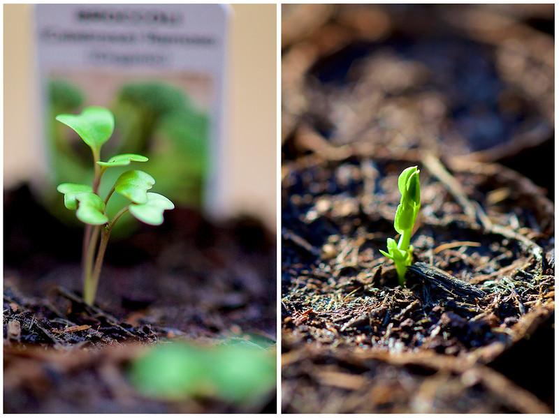 Seedlings_Landscape.jpg