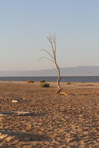 04 The Salton sea (75).JPG