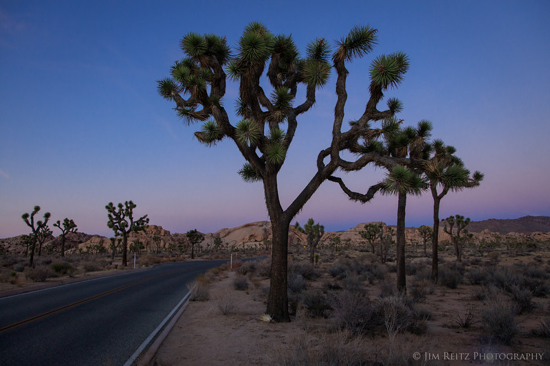 Sunset, Joshua Tree National Park