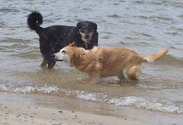 Dogs at VB 5 16