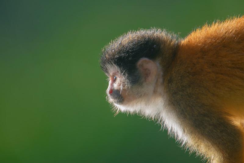 MonkeyDRM_0038.jpg