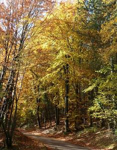 La D6B ; petite route entre forêt & campagne