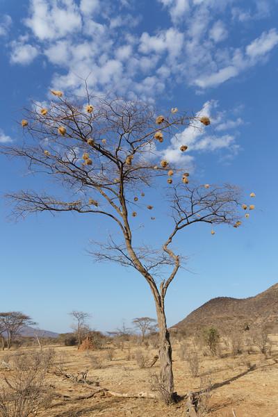 Kenya 2015-00317.jpg