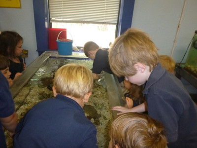 PreK Visits the Touch Tank