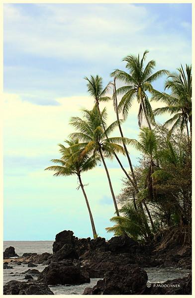 beachcanvas-copy.jpg