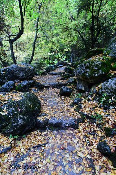 ביער ליד מעיינות פריונה.jpg