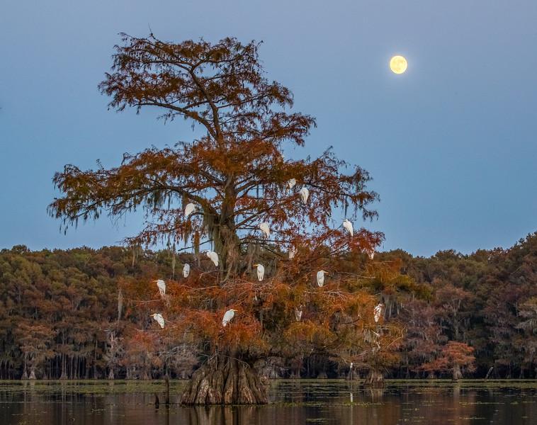 Cypress_Swamps_1117_PSokol-799-HDR-Edit.jpg