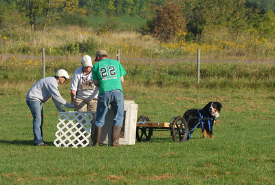 AKC Herding Test and Trials. Sept. Sunday the 11th, 2011