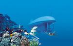 3059Oahu Sub & Deluxe Magic Show - Atlantis Submarine Hawaii
