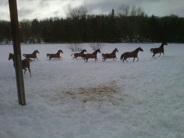 More romping in the new snow.