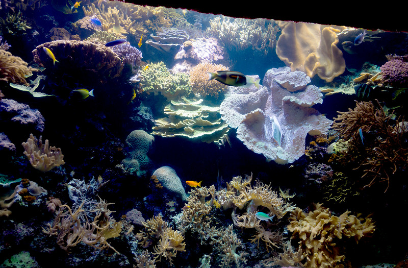 The Aquarium has reconstructed a reef with all its creatures.