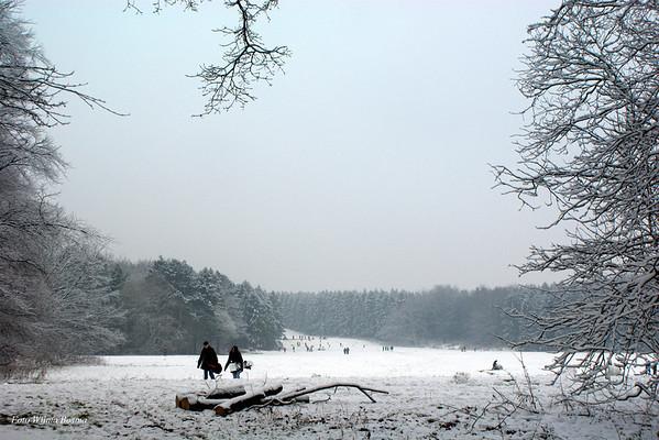Landscapes Winter